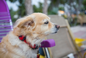 Domestic Pets Images
