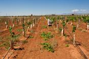 Alamogordo Pistachio Farm
