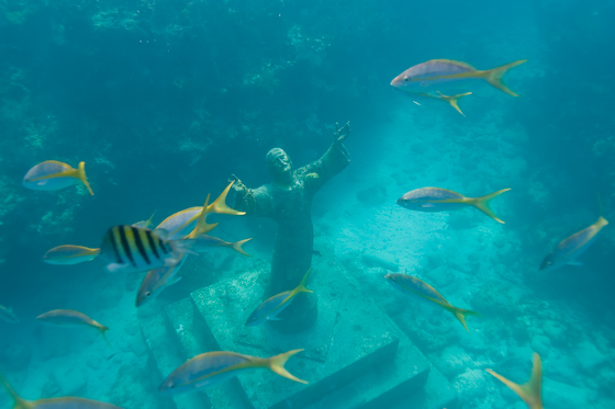Key Largo Florida Coral Reef Coral;fish;florida;keys